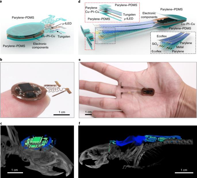 Optogenetica: un dispositivo wireless riesce a 'telecomandare' il cervello