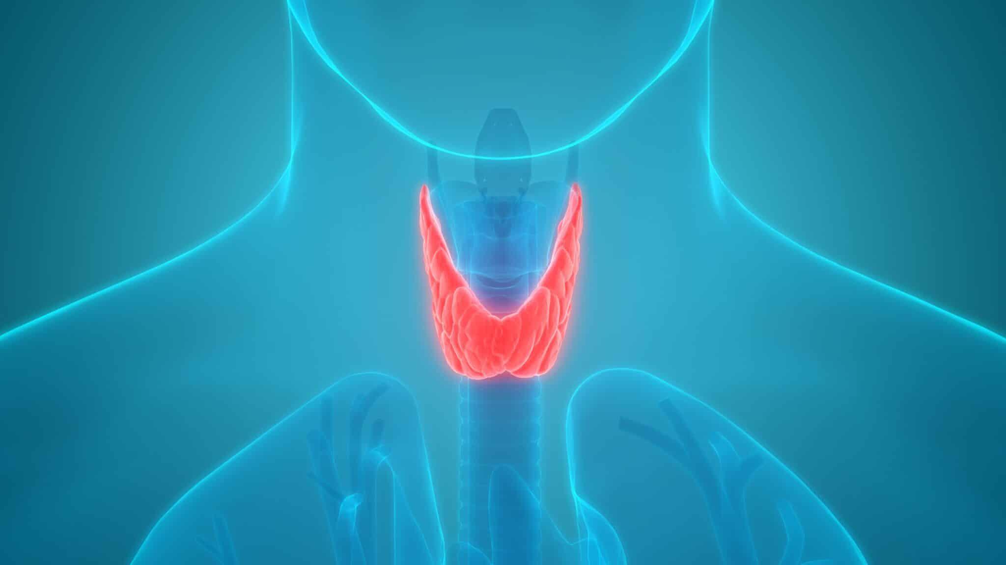 Tiroide: fisiologia, patologia e trattamenti dei disturbi. Credits: Ohga