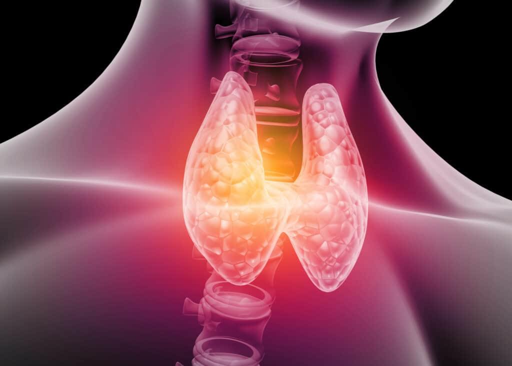 human thyroid