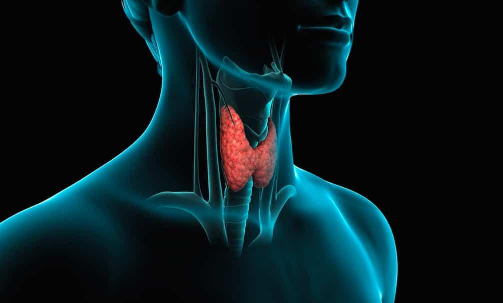 Tiroide: fisiologia, patologia e trattamenti dei disturbi.