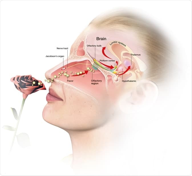 Anosmia covid