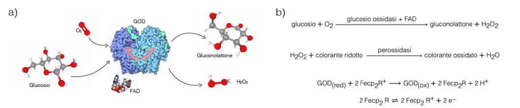 Reazione della glucosio ossidasi.  glucometro