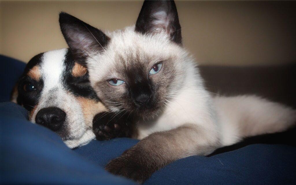 Assicurazione sanitaria animali domestici