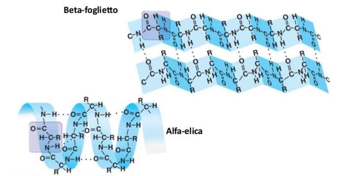la conversione da alfa-elica a beta-foglietto è responsabile dell'insorgenza di malattie neurodegenerative