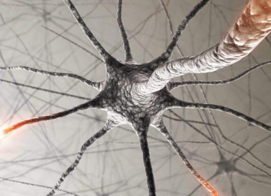 Neuroscienze e grafene: un nuovo passo avanti