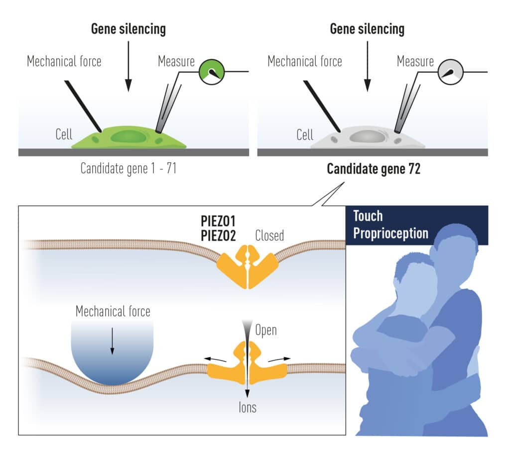 Nobel medicina 2021 alla scoperta dei recettori per temperatura e tatto